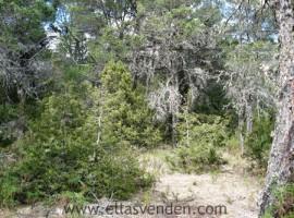 Terrenos en Venta, Pino Real en Arteaga PRO2261