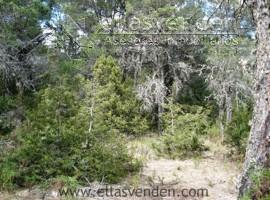 PRO5184 Terrenos en Venta, Pino Real en Arteaga